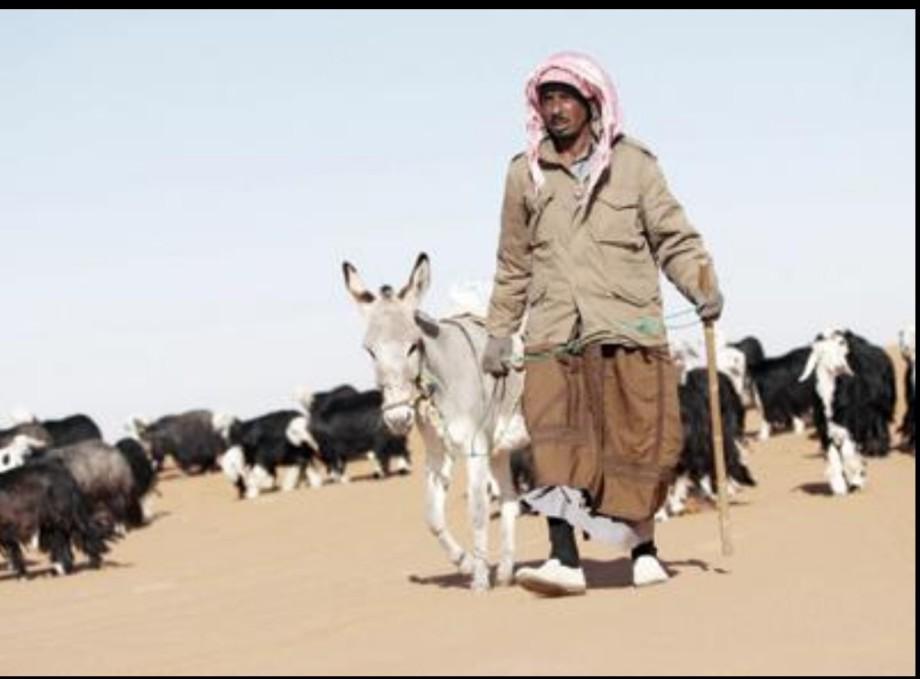 goat herder of Libya