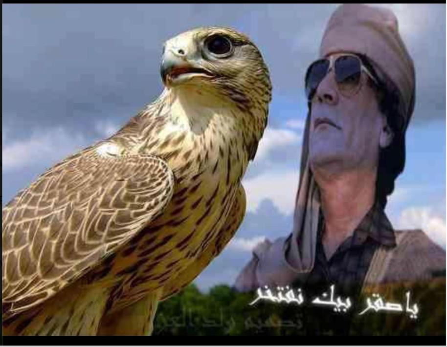 Falcon brave