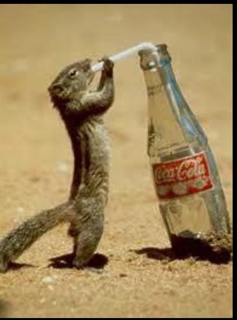Chipmunk Drinks from Coke bottle