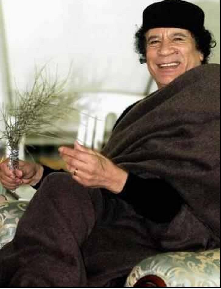 Mu peace palms