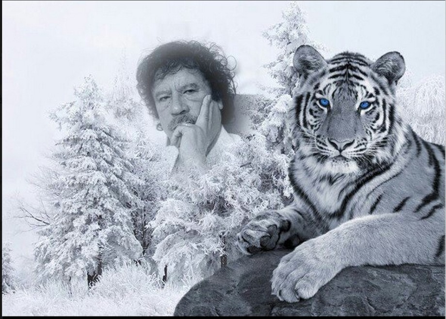 Mu and tiger Saif