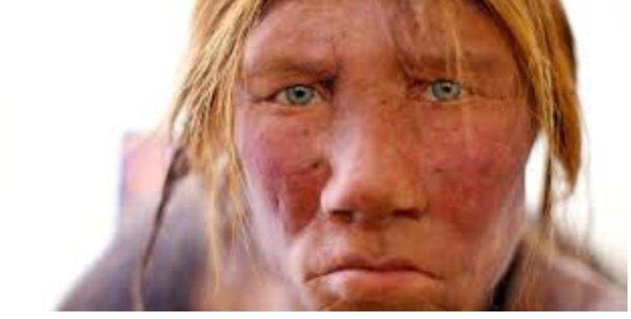 Neanderthal, 2