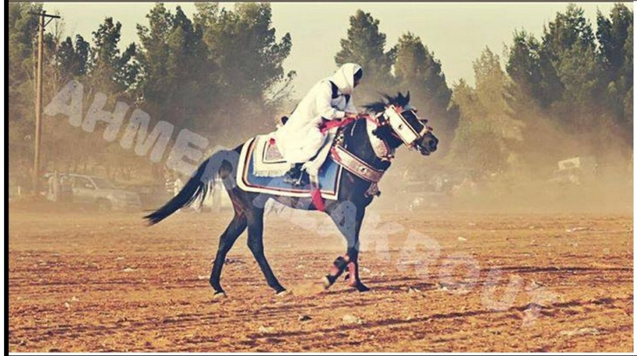 Zintan Horseman, 4