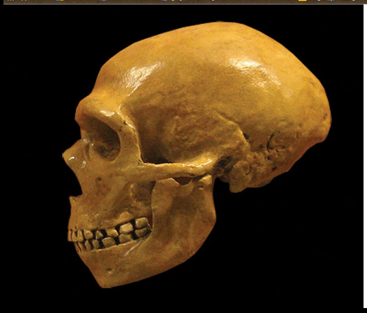 complete Neanderthal skull