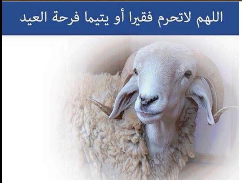 a Sacrificial Lamb
