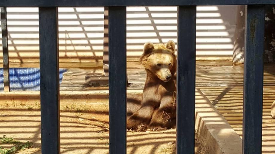 Benghazi Park & Zoo, 2