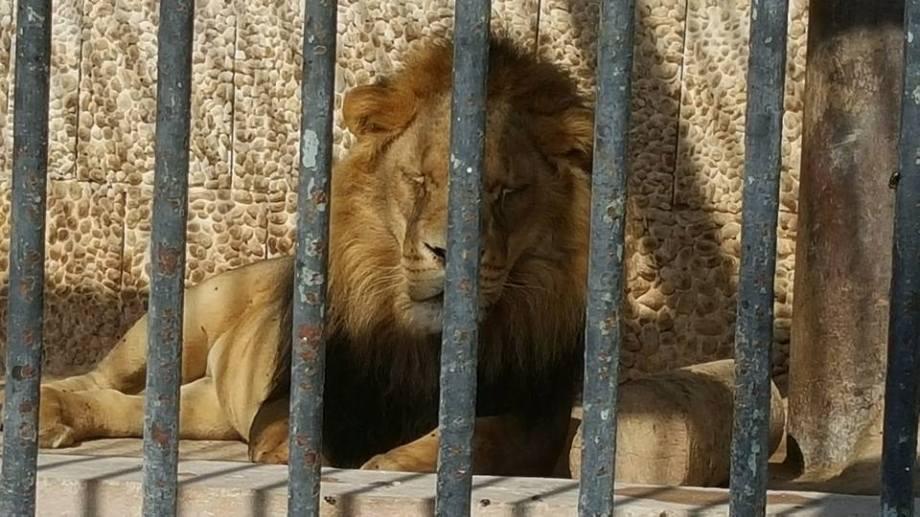 Benghazi Park & Zoo, 3