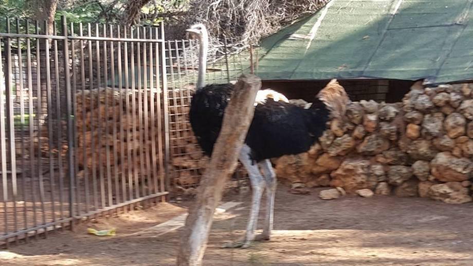 Benghazi Park & Zoo, 4