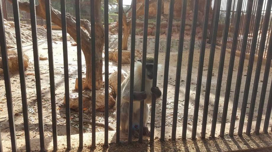 Benghazi Park & Zoo, 5